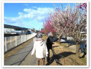 紅白の梅がたくさん咲いていました✿